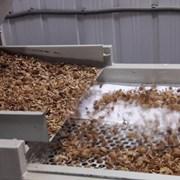 Walnut processing фото