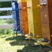 Пчелиные ульи фото