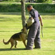 Собака-Телохранитель фото