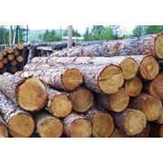 Арнеда и продажа леса фото
