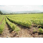 Услуги в сфере земельных правоотношений фото