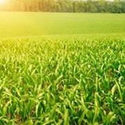Препарат для предпосевной обработки семян Дивиденд экстрим 115 фото