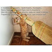 Веники из сорго Молдавия фото