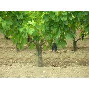 AO Plugusor APC производитель сельскохозяйственной техники для обработки садов и виноградников фото