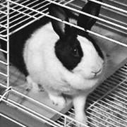 Оборудование для кроликоферм фото