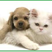 Косметические услуги для животных фото