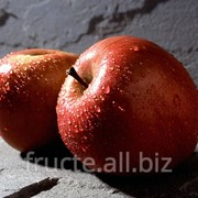 Яблоки на экспорт фото
