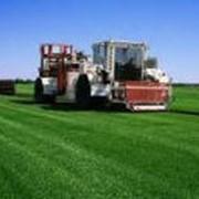 Выращивание рулонных газонов фото