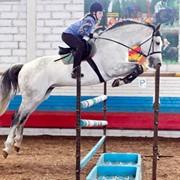 Лошади для спорта Quick Capitol фото