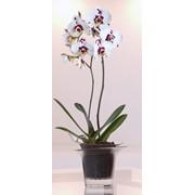 Кашпо для орхидеи Adel фото