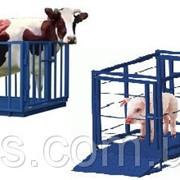 Электронные весы для взвешивания свиней и мелкого рогатого скота УВК-СС 0.7х1.2 фото