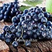 Виноград кишмишных сортов фото