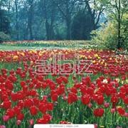 Рыхление цветников фото