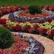 Устройство цветников и клумб фото