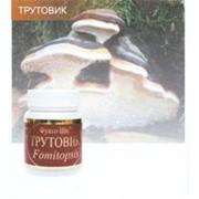 Трутовик гриб фото
