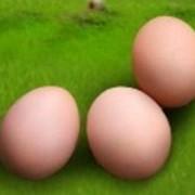 Яйца, заказать Львов фото