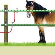 Электропастух для лошадей фото