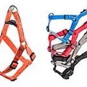 Шлейка синтетическая «Ecco-Sport Quick» 25мм, обхват шеи 45-60см, обхват груди 50-70см фото