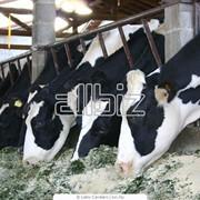 Менеджмент молочных ферм фото