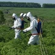 Обработка гербицидами от сорняков. фото