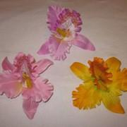Голова орхидеи d 7 см фото