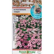 Цветы Остеоспермум Прохлада (15шт) фото