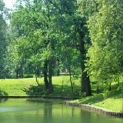Строительство искусственного озера, строительство частных водоемов, искусственные водоемы фото