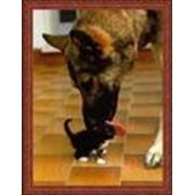 Косметика для животных фото