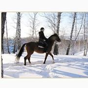 Гостиница Киев-S, Жашков, конные прогулки, экскурсия, на конный завод, езда на лошадях, конях, инструктор, фото
