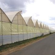Теплицы и тепличные комплексы площадью от 500 до 15 000 м2 для сезонного или круглогодичного выращивания овощных культур фото