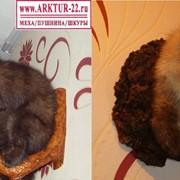 Чучела баргузинского соболя фото