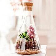 Настольный террариум для растений Chemistry Terrarium Kit фото