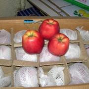 Яблоки. фото