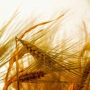 Финансирование производства зерна фото