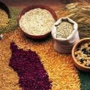 Крупы ячневая, пшеничная, перловая, овсяная, манная, гречневая, горох, рис фото