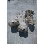 Мицелий грибов вешенка, шампиньонов, опят фото