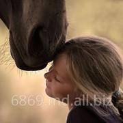 Конные прогулки, прокат лошадей фото