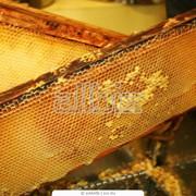 Мёд из лекарственных трав фото