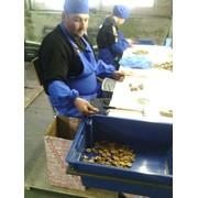 Переработка ,переборка,изготовление оборудования для для переработки грецкого ореха! фото