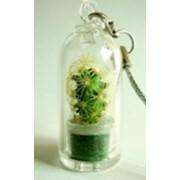 Брелоки с живыми растениями фото