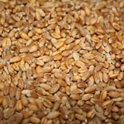 Микронизированная пшеница фото
