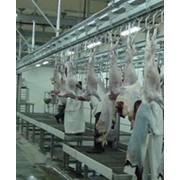 Убой и первичная переработка КРС, МРС, свиней, птицы фото