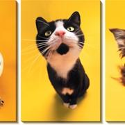 Модульная картина Домашние животные, Неизвестен фото