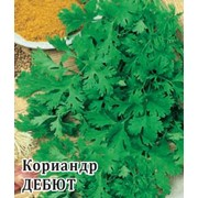 Семена кориандра Дебют фото