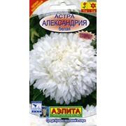 Семена цветов Астра Александрия белая фото