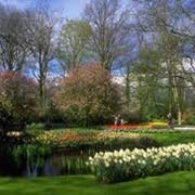 Посадка деревьев и кустарников фото