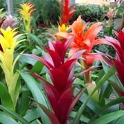 Уход за растениями в саду фото