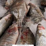Рыба слабосоленая фото