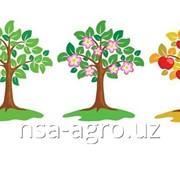 Листовая подкормка яблонь Келкат Микс Кальций, 0,5 кг/га + Аминокат 10-%, 0,5 л/га фото