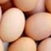 Яйца диетические высшей категории фото